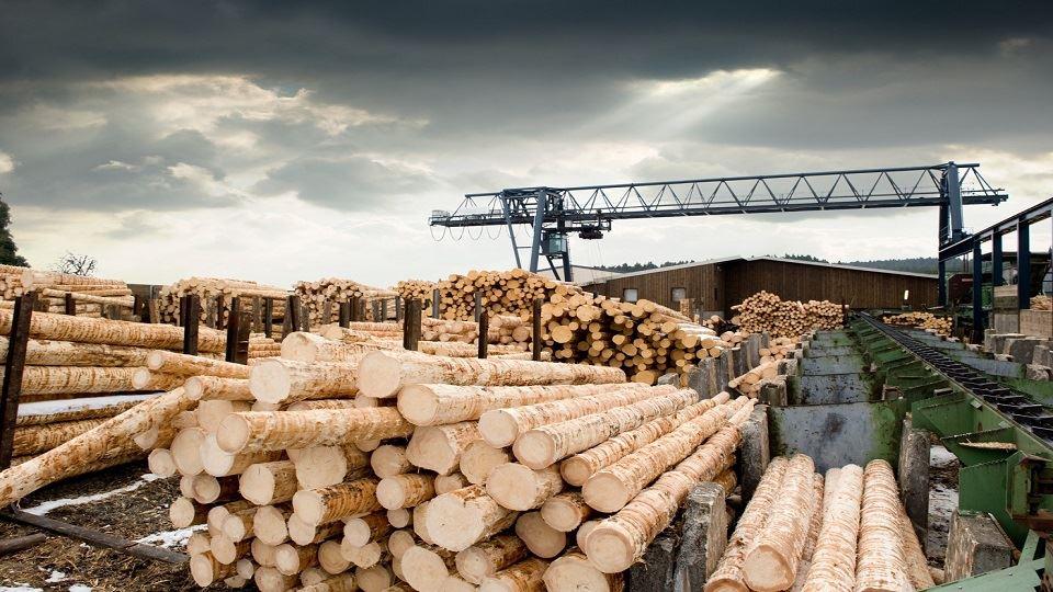 چوب- روسیه- تولید و صادرات در روسیه